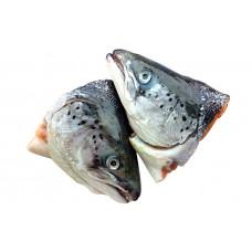 Головы лосося (сёмги)